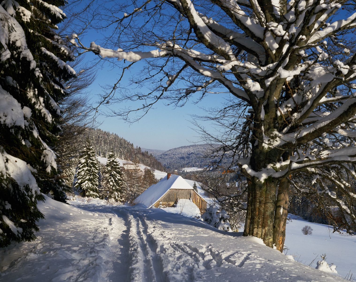 Germany holidays skiing in the black forest is